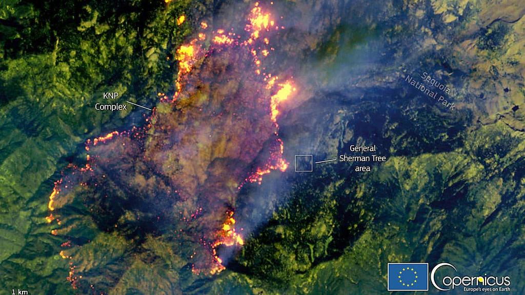 φωτιά Καλιφόρνια μεγαλύτερο δέντρο