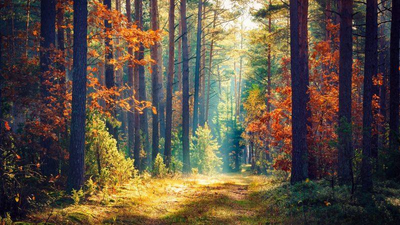 δάσος χαρτογραφήσετε