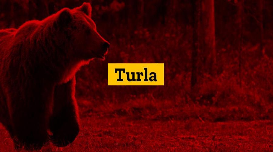 Turla