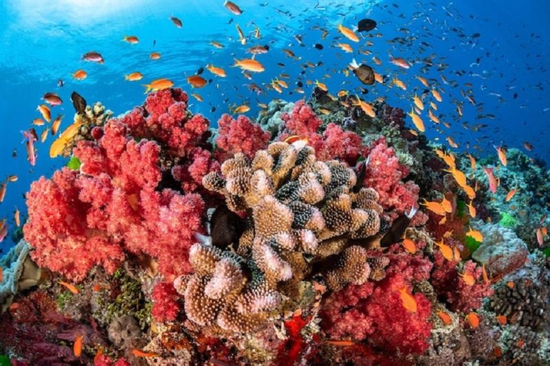 κοραλλιογενείς ύφαλοι